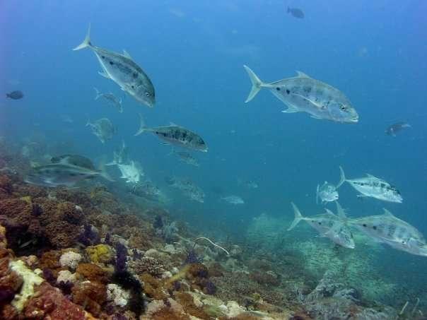 Marine Life on Yongala
